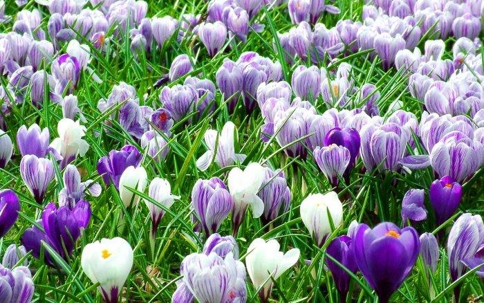 Первоцветы Украины - фото 5