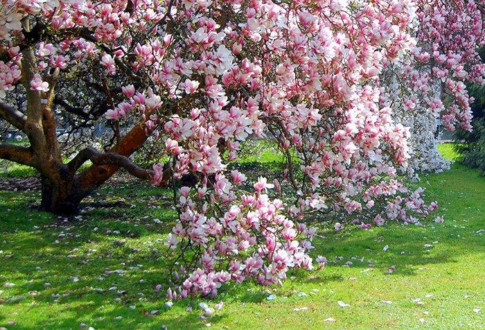 Самые красивые весенние цветы Украины. Где увидеть их цветение?