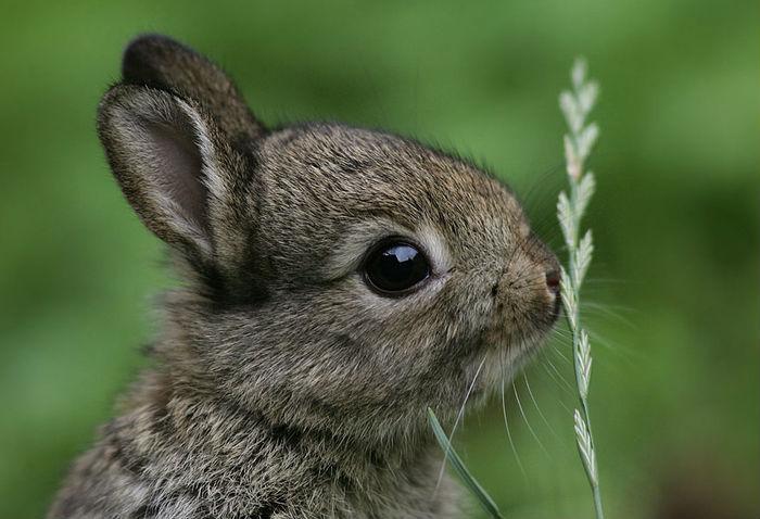 вірші про тварин