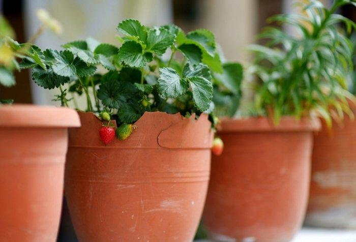 Мини-огород на балконе своими руками - фото 3