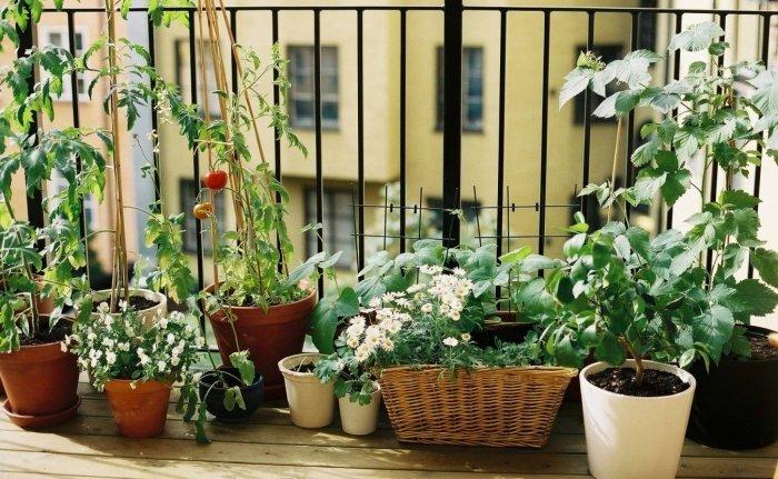 Мини-огород на балконе своими руками - фото 5