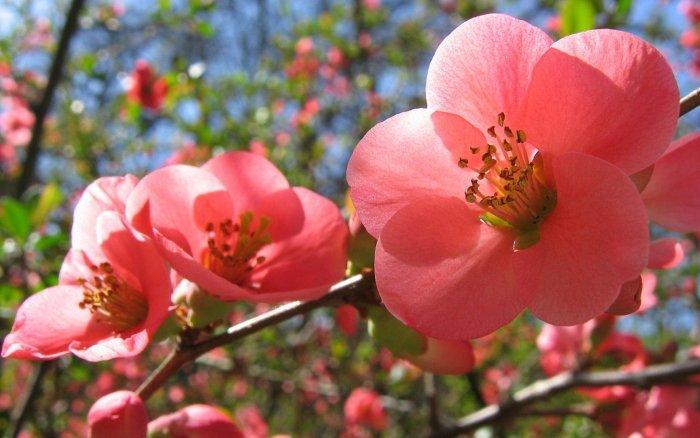 Прислів'я та приказки про весну - фото 6