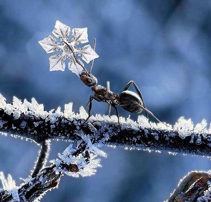 Как насекомые готовятся к зиме, фото 3