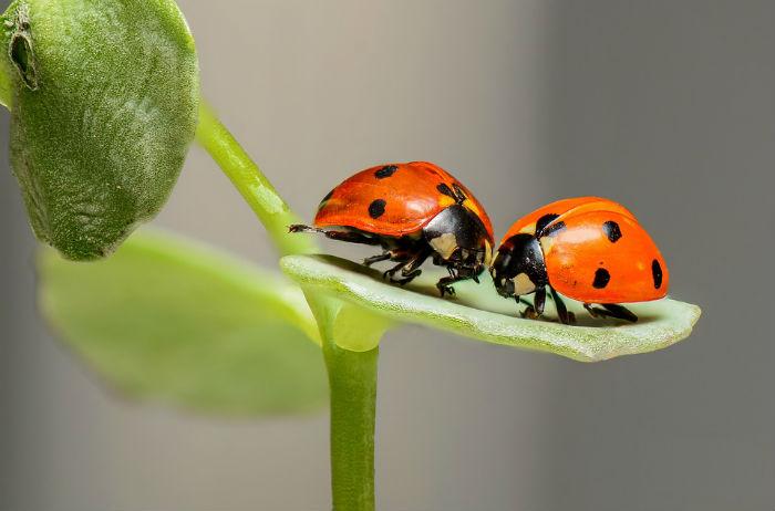 вірші про комах