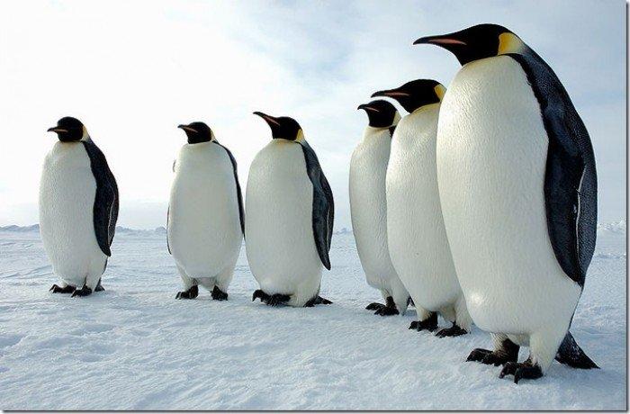 Тварини Антарктиди
