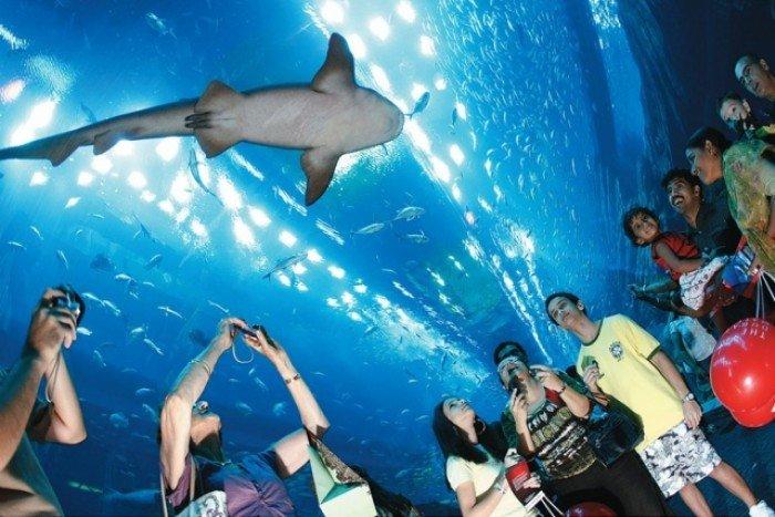 Самые большие аквариумы в мире - Дубай, фото 3