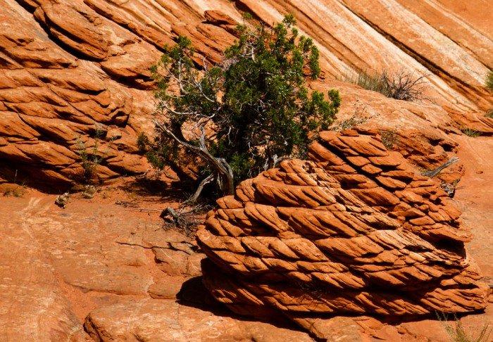 """""""Волна"""", Аризона (США) - фото 13"""
