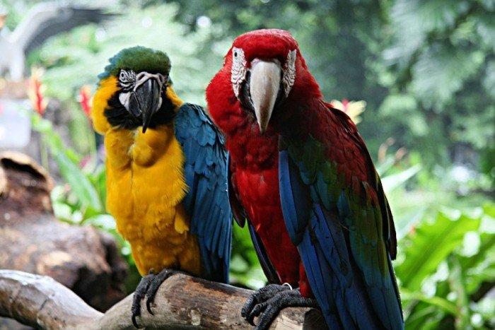 Самые красивые парки мира, фото - Парк птиц «Джуронг», Сингапур