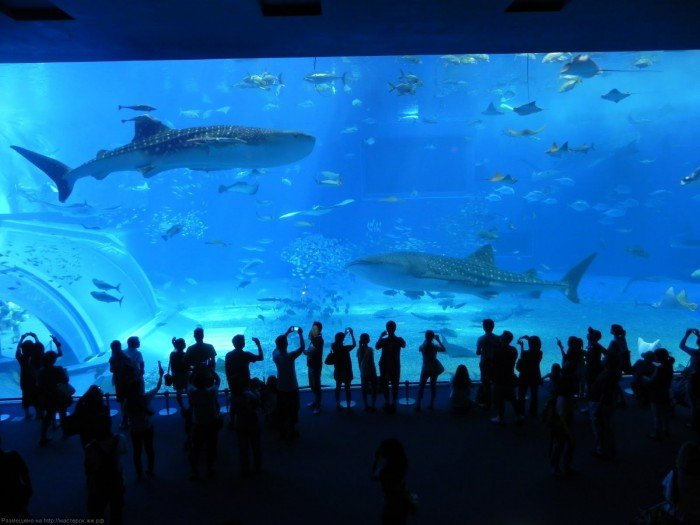 Самые большие аквариумы в мире - Япония, фото 4