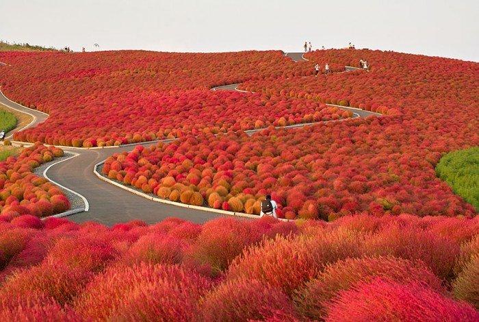 Парк Хитачи, Япония осенью