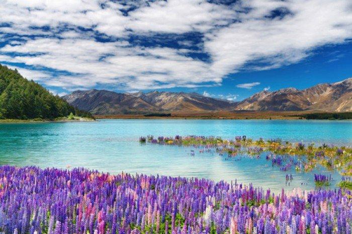 Красивые пейзажи природы. Фото - Новая Зеландия, озеро