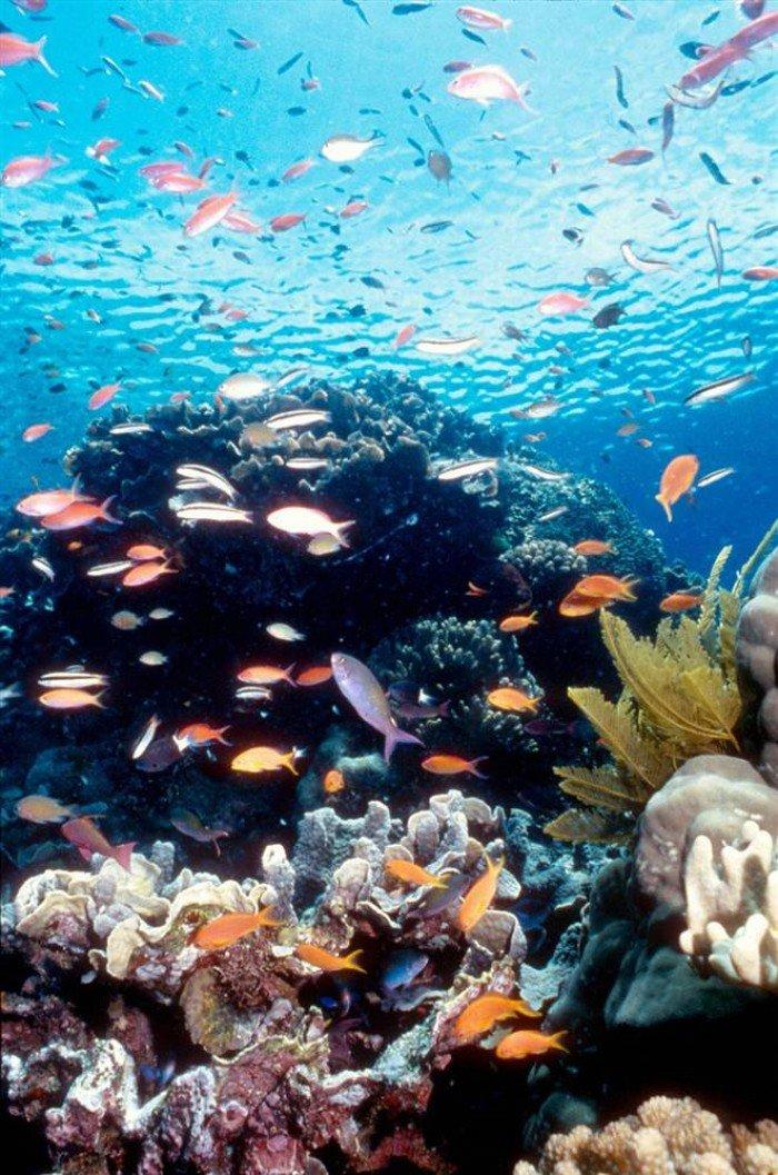 Всемирное наследие ЮНЕСКО, фото - Большой Барьерный риф