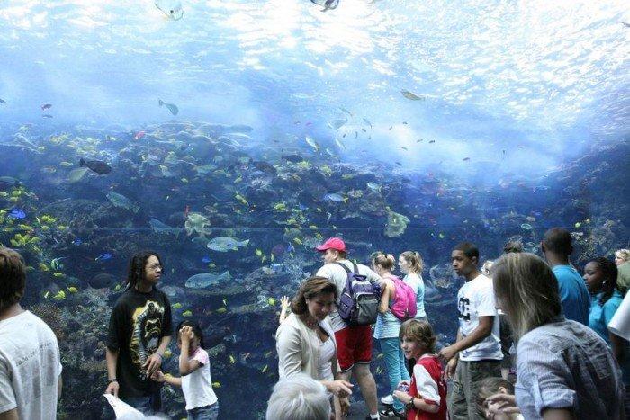 Самые большие аквариумы в мире - Джорджия, фото 3