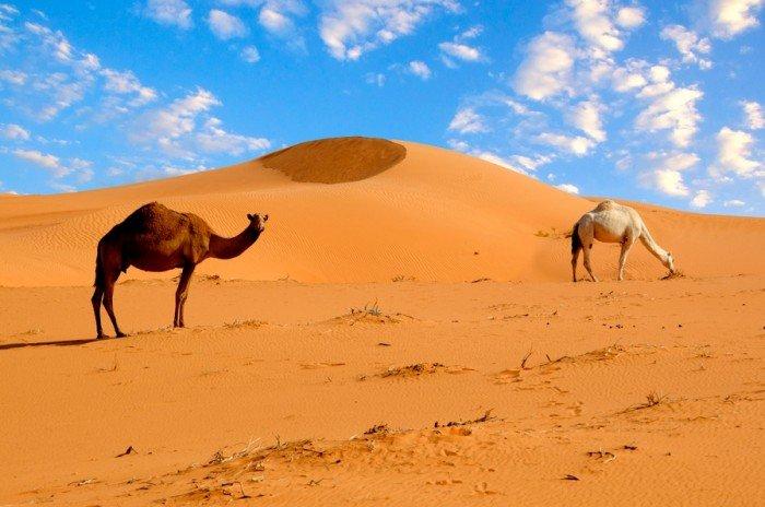 Интересные факты о пустыне Сахаре