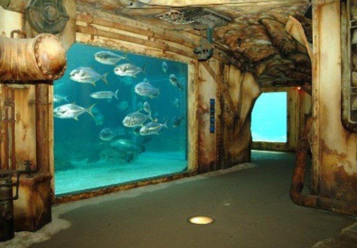 Самые большие аквариумы в мире - Африка, фото 2