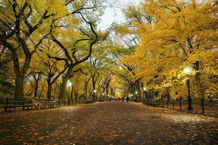 Фото осеннего пейзажа. Аллея поэтов в Центральном парке Нью-Йорка, США