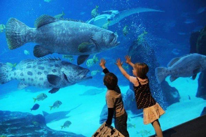 Самые большие аквариумы в мире - Джорджия, фото 4