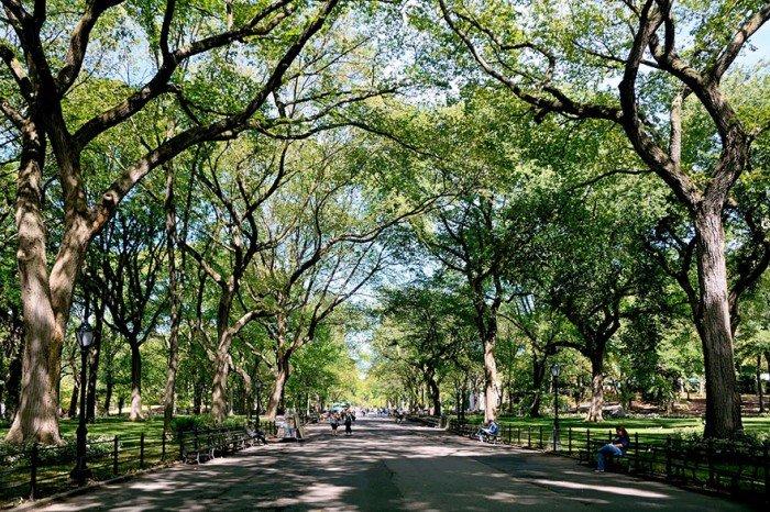 Аллея поэтов в Центральном парке Нью-Йорка, США летом