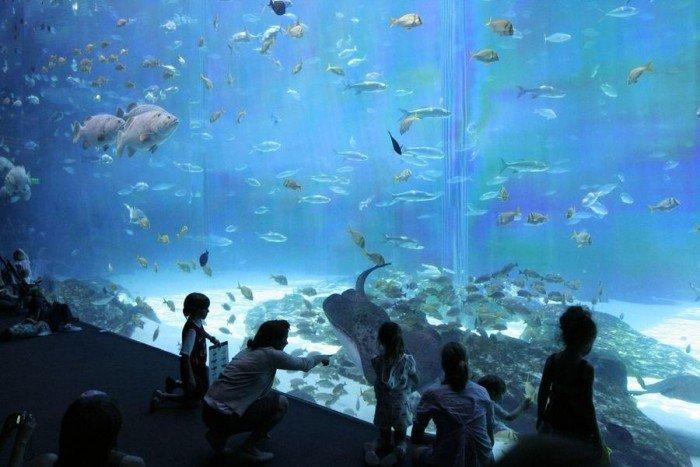 Самые большие аквариумы в мире - Джорджия, фото 6