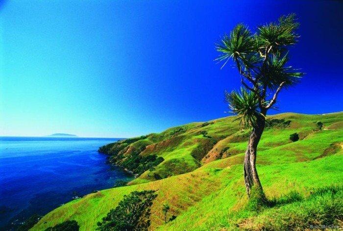 Красивые пейзажи природы. Фото - Новая Зеландия, Морской заповедник