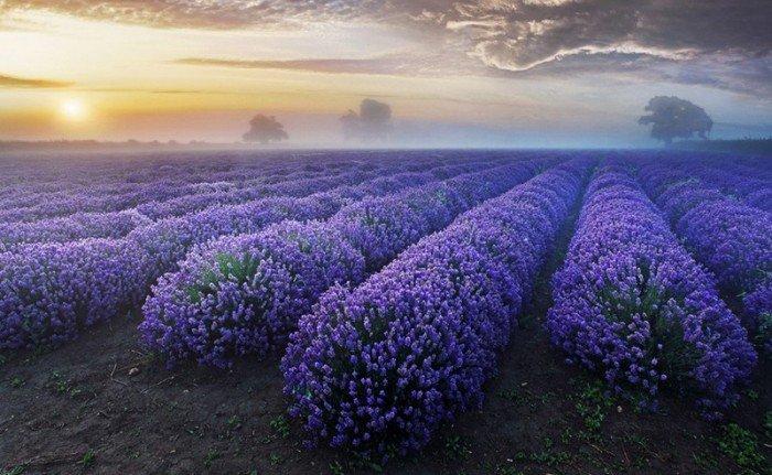 Самые красивые пейзажи от профессиональных фотографов, фото природы - 4