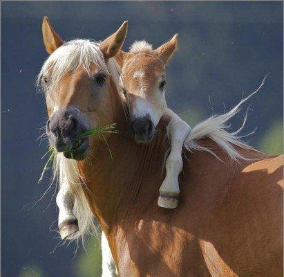 Мамы и их дети в мире животных
