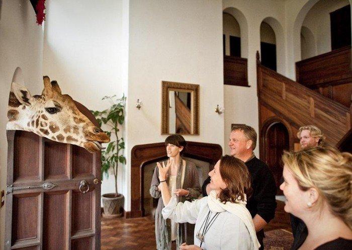 Жирафи Ротшильда, готель Giraffe Manor в Найробі (Кенія) - фото 6