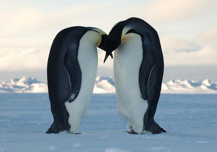 Пінгвіни в Антарктиді