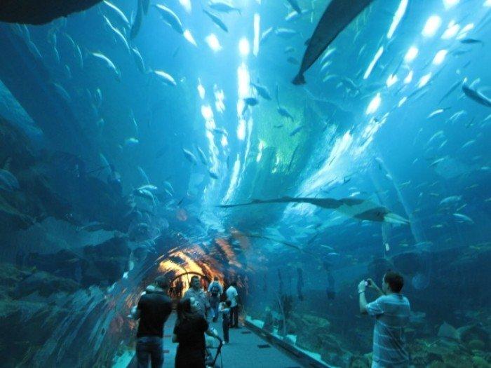 Самые большие аквариумы в мире - Дубай, фото 6
