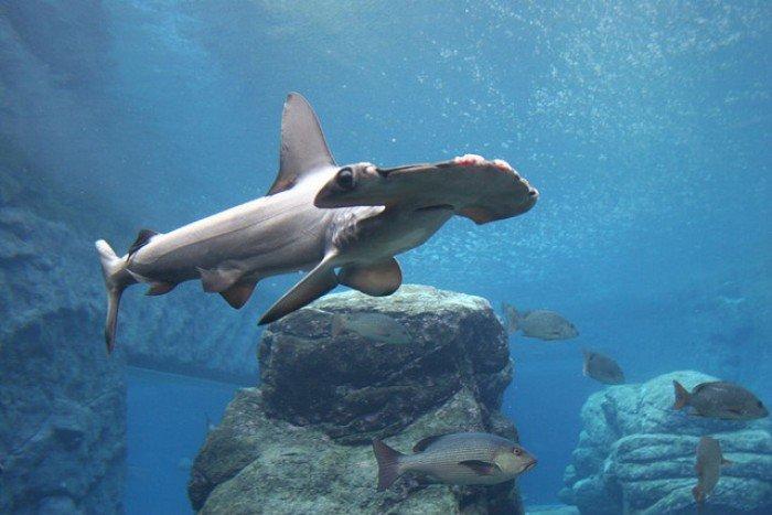 Самые большие аквариумы в мире - Африка, фото 3