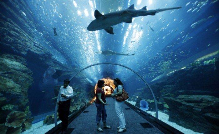 Самые большие аквариумы в мире - Дубай, фото 5