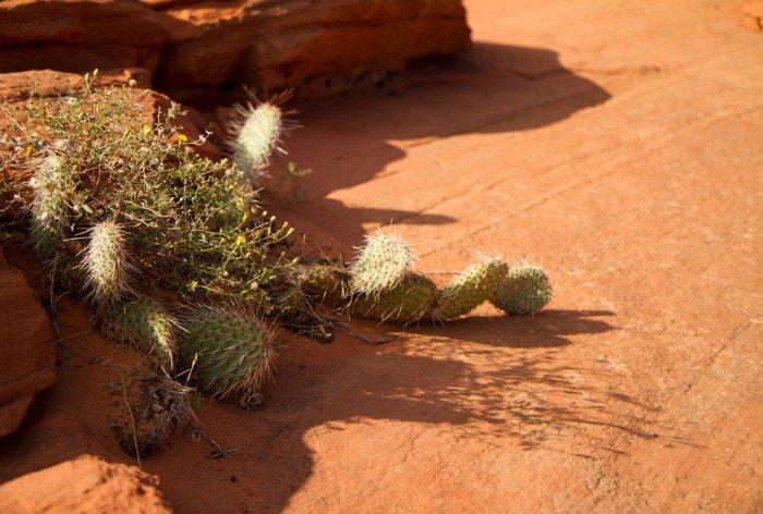 """""""Волна"""", Аризона (США) - фото 4"""