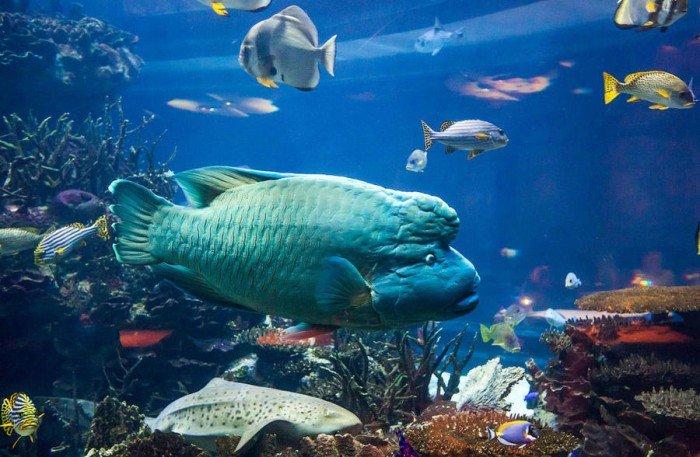 Ресторан акваріум «Аль Махара» в Дубаї, фото 6