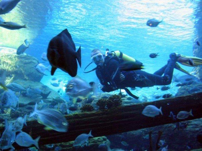 Самые большие аквариумы в мире - Африка, фото 1