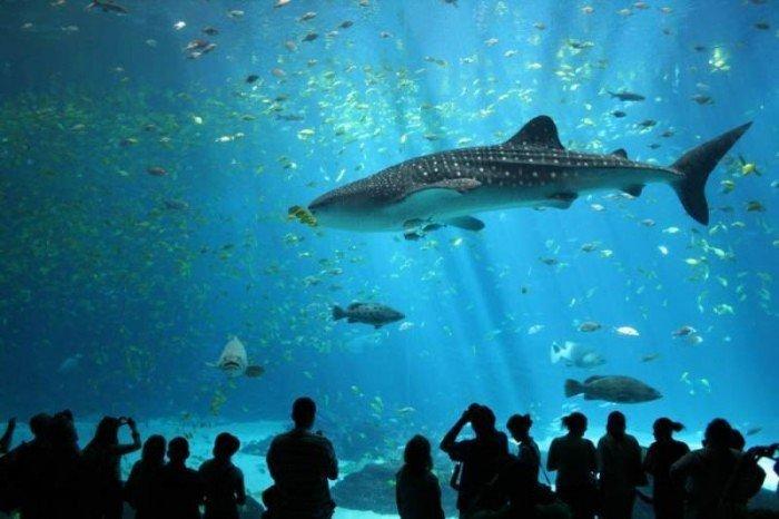 Самые большие аквариумы в мире - Джорджия, фото 1