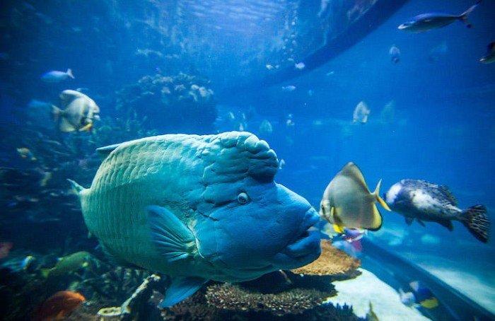 Ресторан акваріум «Аль Махара» в Дубаї, фото 5