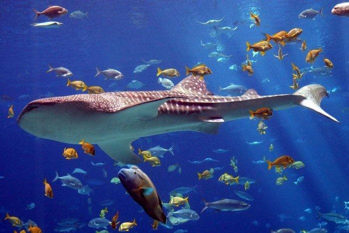 Самые большие аквариумы в мире - Джорджия, фото 2