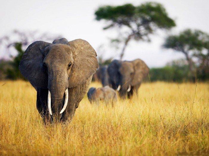 Онлайн веб-камери світу - Африка