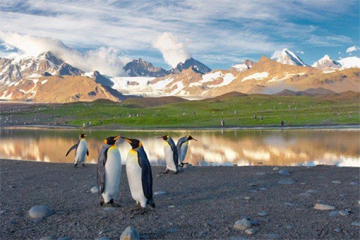 Красивые пейзажи природы. Фото - США, остров пингвинов