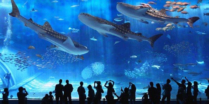 Самые большие аквариумы в мире - Япония, фото 1