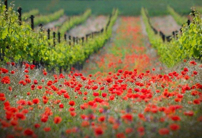 Самые красивые пейзажи от профессиональных фотографов, фото природы - 9