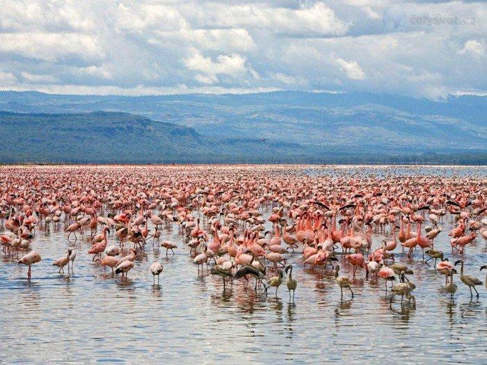 Найкрасивіші озера світу, фото - Кенія