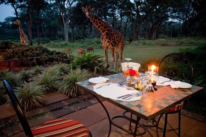 Жирафы Ротшильда, отель Giraffe Manor в Найроби (Кения) - фото 12