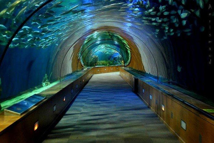Самые большие аквариумы в мире - Испания, фото 2