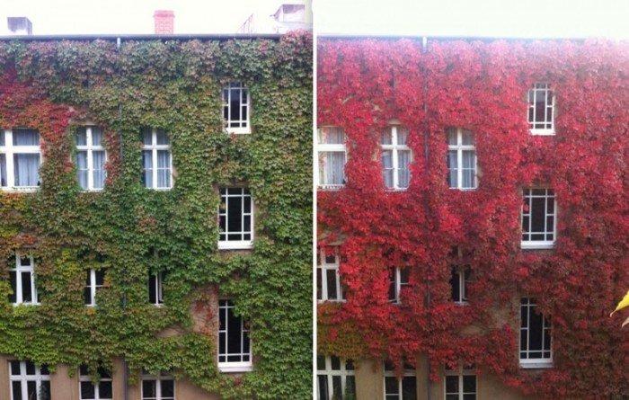Многоэтажка летом и осенью