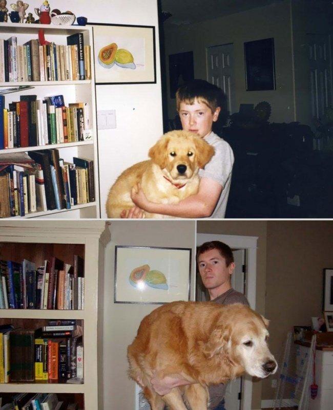 """Животные и их хозяева годы спустя. Фото домашних животных """"до"""" и """"после"""" - 19"""