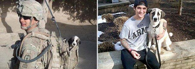 """Животные и их хозяева годы спустя. Фото домашних животных """"до"""" и """"после"""" - 12"""