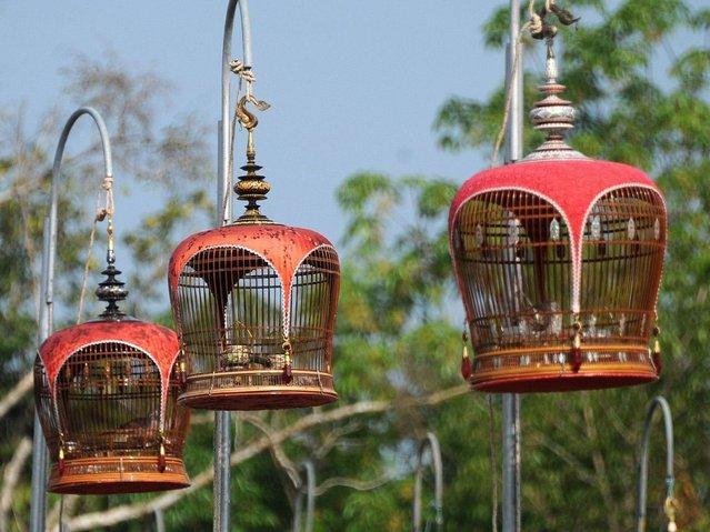 Конкурс співочих птахів