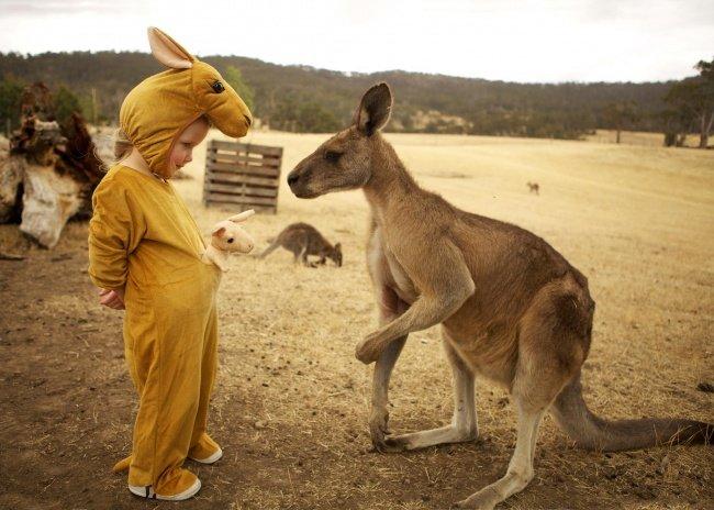 Больше чем фото, кенгуру