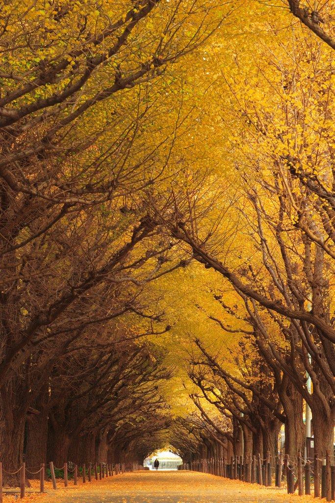 Чарівні тунелі з дерев